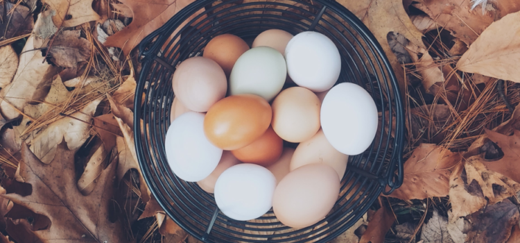 WILL CHICKEN EGGS CHANGE THE COVID-19 VACCINE LANDSCAPE?